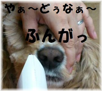 コニー顔バリ4