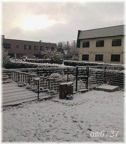 雪庭3(朝早く)