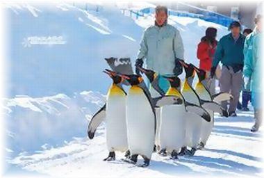 旭山ペンギン行進