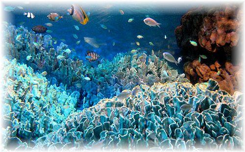 サンシャイン魚