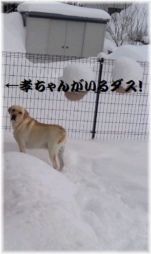 もち。雪の中