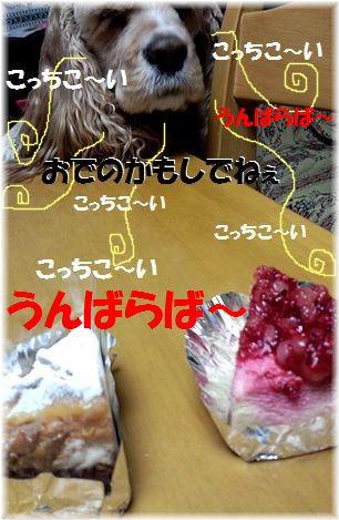 コニーチーズケーキ