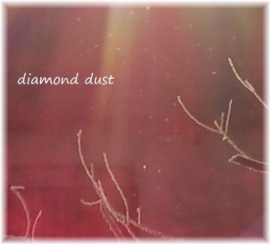 ダイヤモンドダスト木