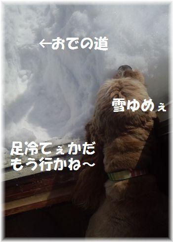 コニー仏間窓際雪食い