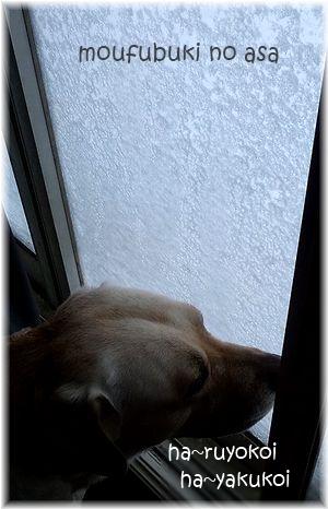 猛吹雪窓ともちゃ。1