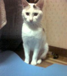 20104momo2.jpg