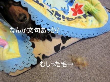 001_20110219052724.jpg