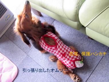 011_20100503201856.jpg
