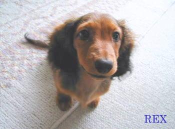 rex000402h_20100608185309.jpg