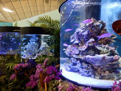 沖縄水族館 (3)