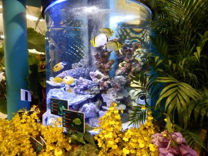 沖縄水族館 (14)