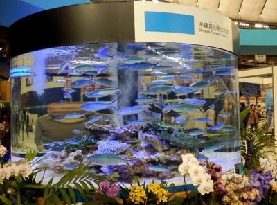 沖縄水族館 (19)