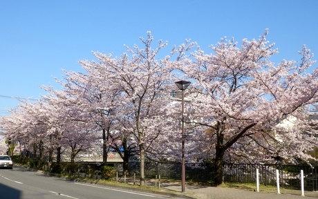 京都 (12)