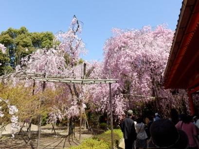 京都 (5)