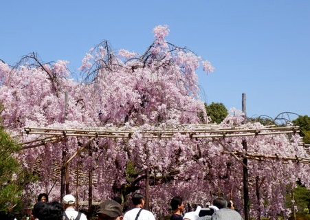 京都 (47)