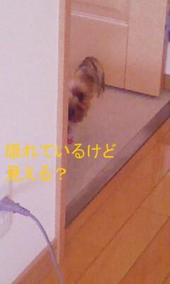 DVC00084.jpg