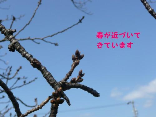 P1020157.jpg