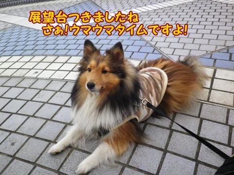 20121223_1_2.jpg