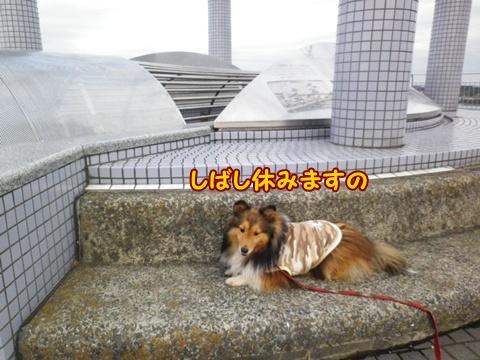 20121223_1_6.jpg