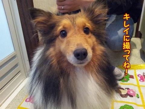 20121229_150406.jpg