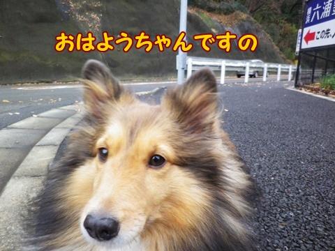 20121229_3.jpg