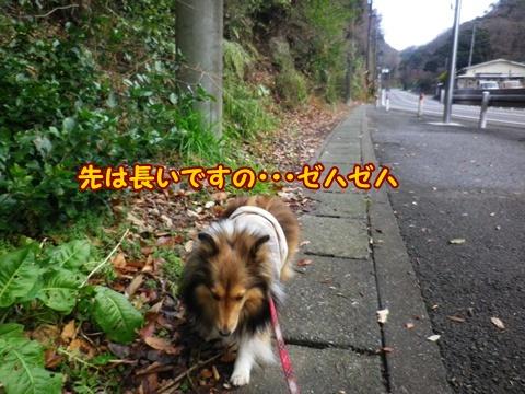 20121229_7.jpg