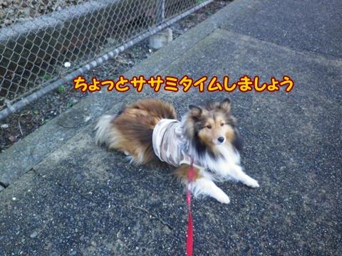 20121229_8.jpg