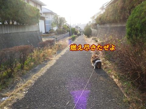 20130307_7.jpg