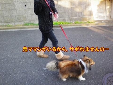 20130308_0_2.jpg