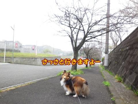 20130328005.jpg