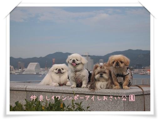 231103神戸 D
