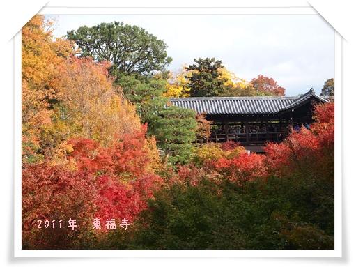 20111120東福寺 L