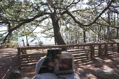 海辺の三保松原と富士山-4