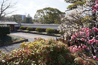 梅の花咲く紅葉山庭園-2