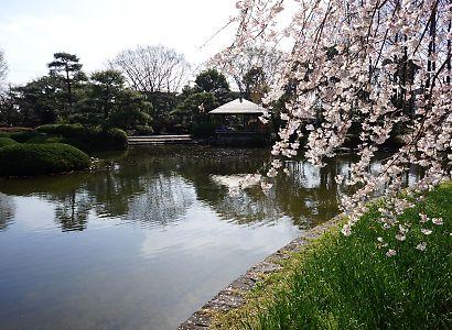 写真城北公園シダレ桜-3