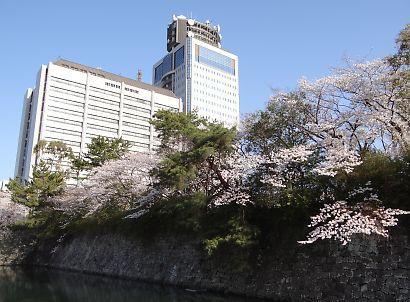 駿府城公園桜開花画像-1