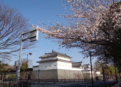 駿府城公園桜開花画像-2