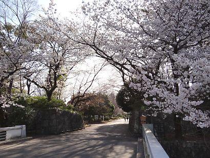 駿府城公園桜開花画像-3