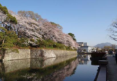 駿府城公園桜開花画像-4