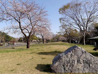 駿府城公園桜開花画像-5