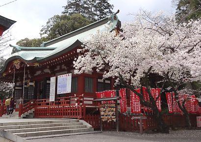 浅間神社枝垂れ桜写真26日-1
