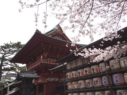 浅間神社枝垂れ桜写真26日-3