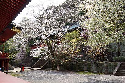 浅間神社枝垂れ桜写真26日-4