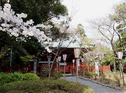 賤機山の桜画像-1