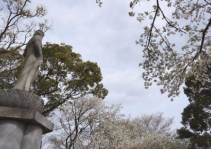 賤機山の桜画像-7