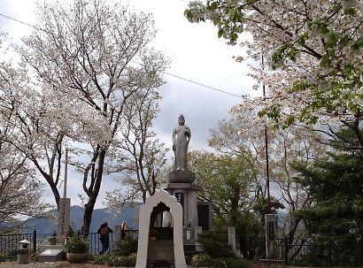 賤機山の桜画像-9