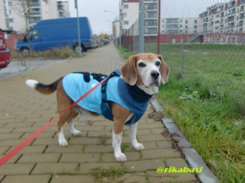 CIMG0932_20121031052051.jpg