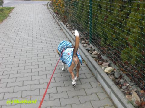 CIMG1405_20121129071657.jpg