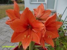 CIMG8343_20121227191046.jpg