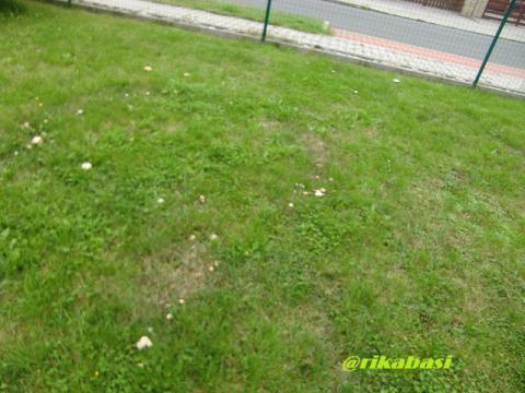 CIMG9325_20121002043727.jpg